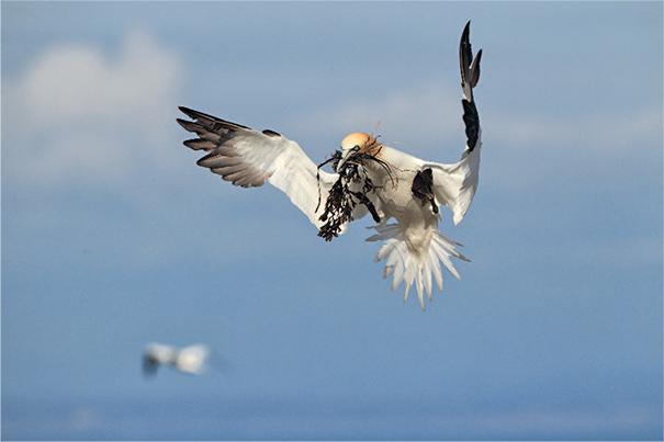 La Bretagne, terre d'accueil des oiseaux