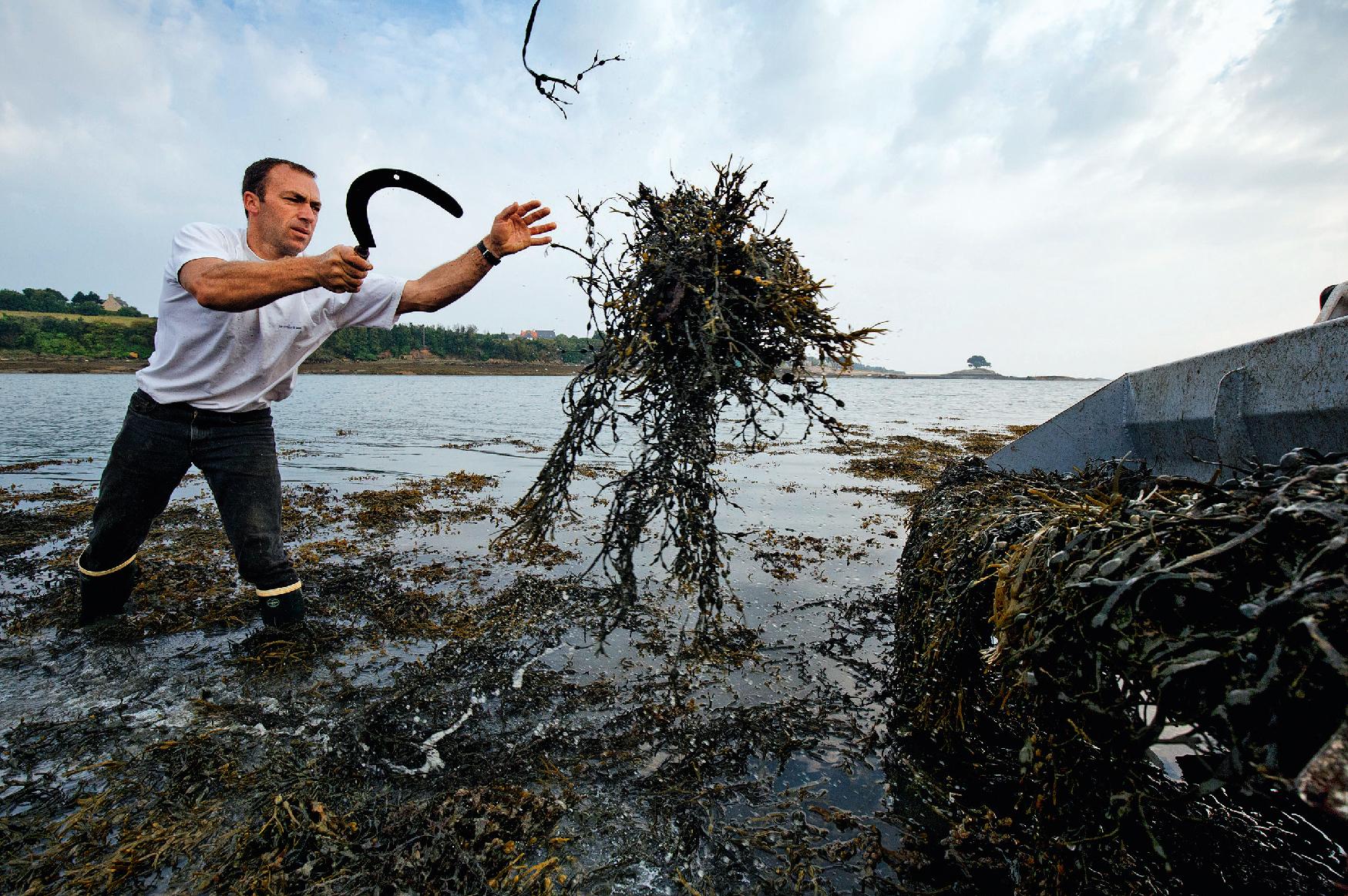 Algues, les champs du possible