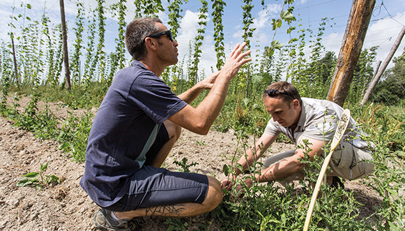 Malterie, culture du houblon La filière brassicole se structure
