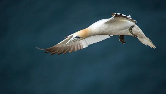 L'eldorado des oiseaux marins